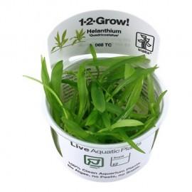 Tropica 1-2-Grow