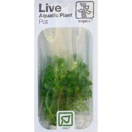 TROPICA LIVE AQUATIC PLANT POT
