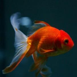 Peixes de água fria