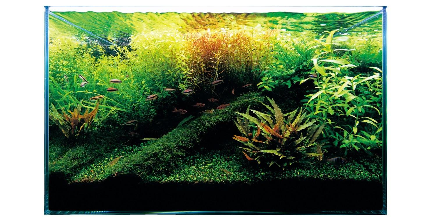 Ada Nature Aquarium.