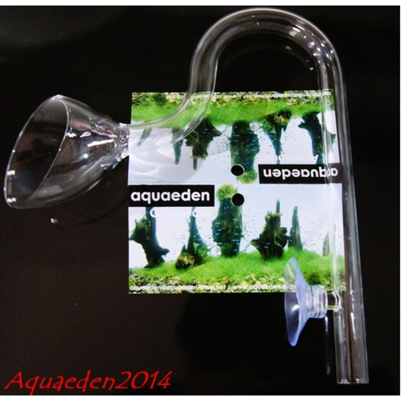 Lily Pipe Aquaeden out