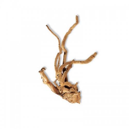 Red moor branch 20-30cm