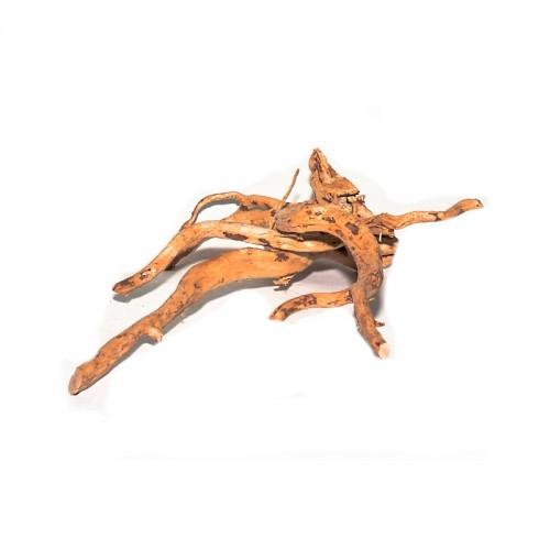 Red moor branch 10-20 cm