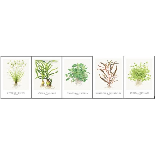 Art Cards 13x18cm (incl Cyperus)